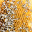 Bees on honeycomb in a beehive — Stock Photo