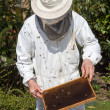 Beekeeper caring for bee colony — 图库照片