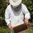 Beekeeper caring for bee colony — Stock Photo #25590089