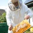 Stock Photo: Beekeeper caring for bee colony