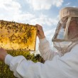Beekeeper holds honeycomb of a beehive against the sun — Stock Photo