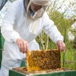 Beekeeper caring for bee colony — Stock Photo #25590255