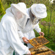 Two beekeepers maintaining bee hive — Stok fotoğraf