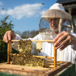 Beekeeper caring for bee colony - Stock Photo
