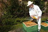 Beekeeper applying smoke to bee colony — Stock Photo