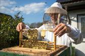 Apicultor cuidando de abejas — Foto de Stock