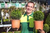 Gardener or employee at garden center posing with boxtrees — Stock Photo