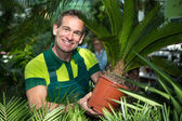 Gardener presenting potted palm tree at nursery or garden center — Stock Photo