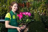 园丁呈现五颜六色的鲜花盆栽的植物 — 图库照片