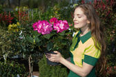 Florist smelling at blossoms of potted plan — Foto Stock