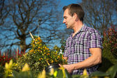 Man looks at bush full of berries in nursery — Stock Photo
