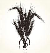 Wheat — Stock Vector