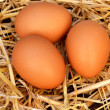 Nest with chicken eggs — Stock Photo #18120889