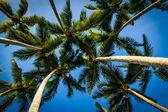 Palms and blue sky — Stock Photo