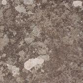 Lichen on the stone — Stock Photo