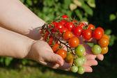 Tomates y nands — Foto de Stock