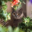 Cristmas cat — Stock Photo
