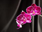 пятнистая орхидея — Стоковое фото