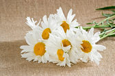 Bouquet de marguerites — Photo