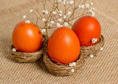 Nests  with Easter eggs and flowers   — Stock fotografie