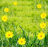 緑の繁茂した花 — ストック写真