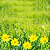 цветы зеленые grassand — Стоковое фото