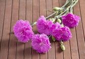 Bouquet of carnations — Foto de Stock