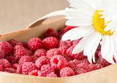 Raspberries and daisies — Stock Photo