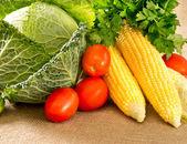 Set of fresh vegetables — Photo