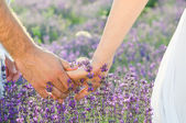 Walking in lavender — Stock Photo
