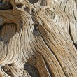 Old gnarled wood — Stock Photo #18107181