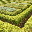 Topiary hedge garden — Stock Photo