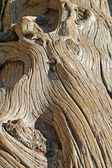 Old gnarled wood — Stock Photo