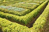 Topiary hedge garden — ストック写真