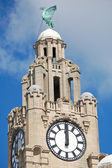 Liver Building Tower — Stock Photo