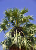 Palmový cukr — Stock fotografie