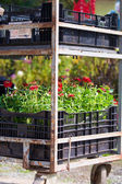 Gardening Cart — Stock Photo