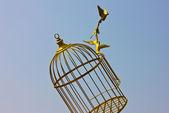 Art empty bird golden cage — Stock Photo