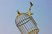 Art empty bird golden cage — Stock Photo