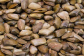 Clams at the local market — Stock Photo