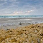 Winter sea — Stock Photo