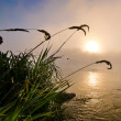 Spiderweb at colorful foggy dawn at the lake — Stock Photo