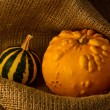 Unusual yellow pumpkin and small watermelon — Stock Photo