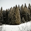 Cold snow forest — Stock Photo