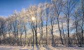 Crystal trees — Stock fotografie