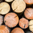 Stock Photo: Firewood- freshly sawn timber texture