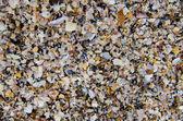 Broken seashells texture — Stock Photo
