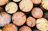 Firewood- freshly sawn timber texture — Stock Photo