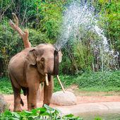 Elephant make water spray - Nature shower — Foto de Stock