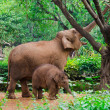 Big elephant mother and small baby — Stock Photo #44492237